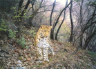 BBC Wildlife Camera-trap Photo of the Year 2012