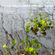 Free eBook 10 Easy Ways to Make a Wildlife Garden