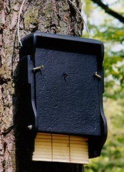 Schwegler Woodcrete 1FF Bat Box