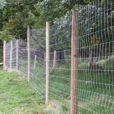 Deer Fencing Deer Gates